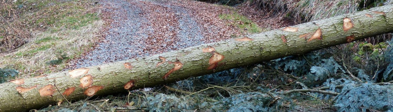 Ein Baum quer auf dem Weg