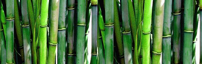 Bambus im Wind - Solare Heiltechniken in Prien am Chiemsee